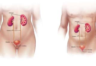 Infectie urinara - simptome, cauze si tratament